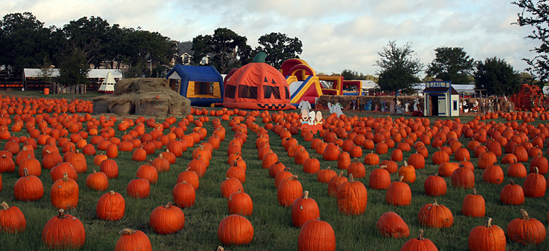 lots-of-pumpkins